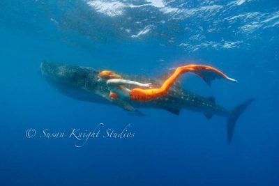 The Mermaid Atlantis - Whale Shark Shadow